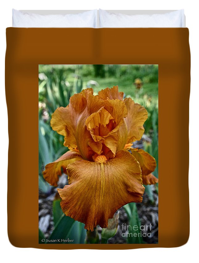Plant Duvet Cover featuring the photograph Amber Iris by Susan Herber