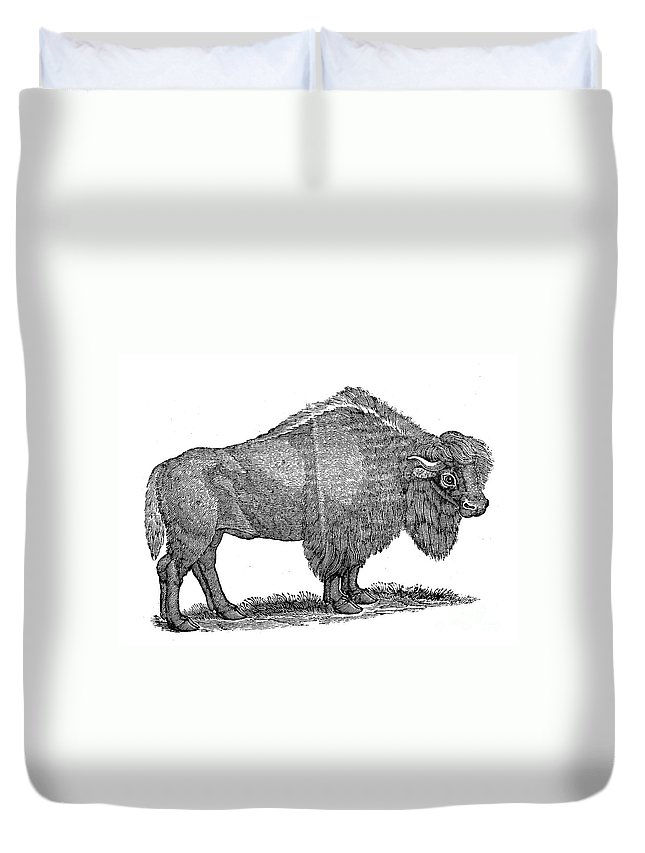 1840 Duvet Cover featuring the photograph American Buffalo by Granger