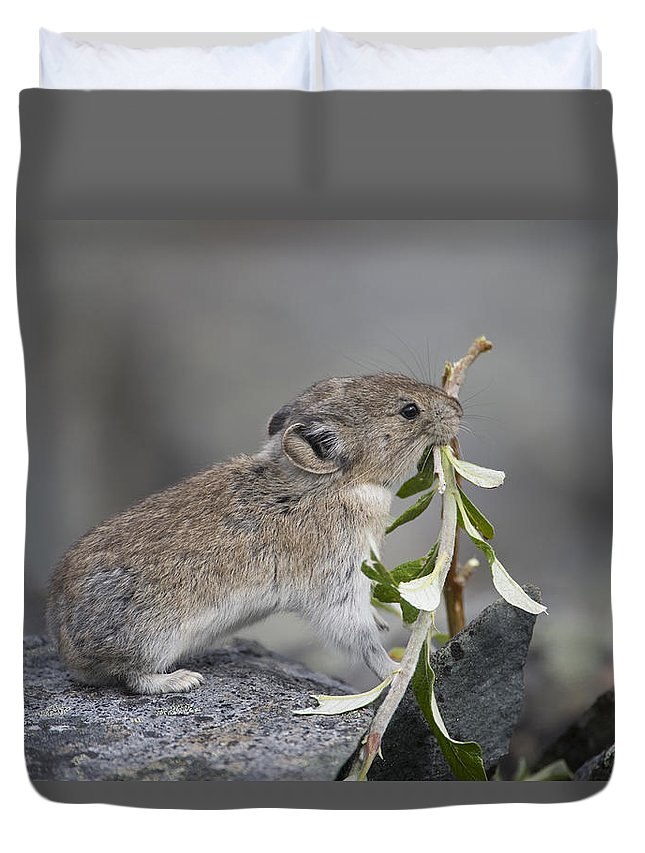 Mp Duvet Cover featuring the photograph American Pika by Michael Quinton