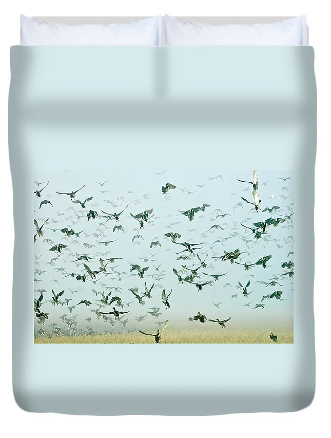 Birds Duvet Cover featuring the photograph An Explosion Of Mallards by Albert Seger
