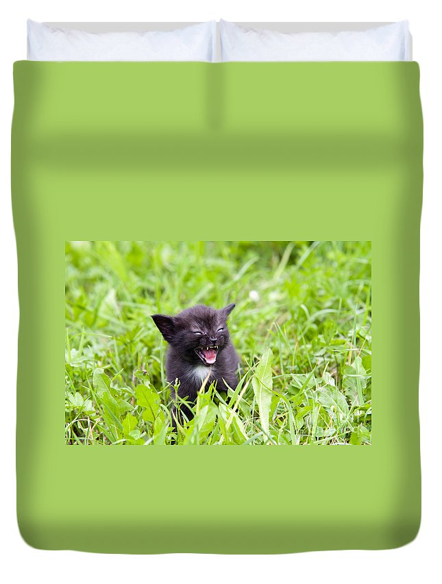 Adorable Duvet Cover featuring the photograph Angry Kitten by Michal Boubin