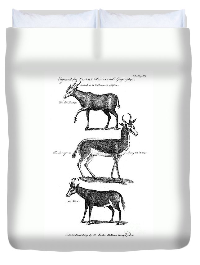 1791 Duvet Cover featuring the photograph Antelopes by Granger