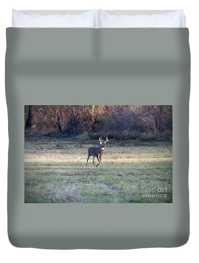 Deer Duvet Cover featuring the photograph Antlers In The Sun by David Arment