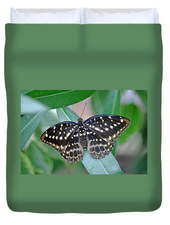 Archduke Butterfl Duvet Cover featuring the photograph Archduke Butterfly by Tony Murtagh
