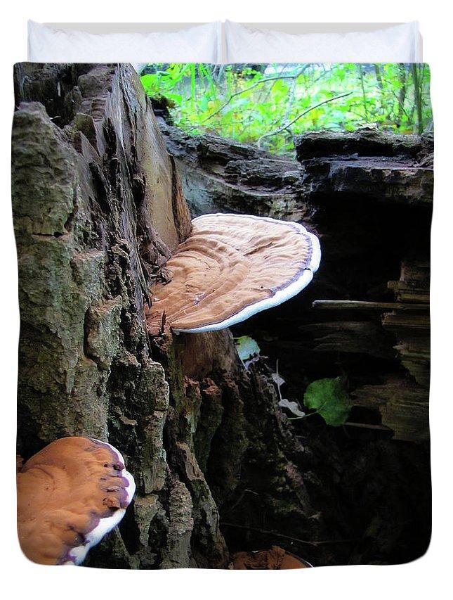 Mushroom Duvet Cover featuring the photograph Artist Conk Mushroom by September Stone