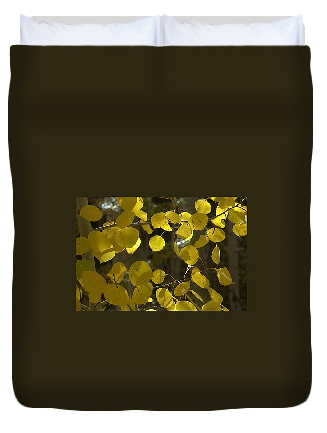 Autumn Duvet Cover featuring the photograph Aspen Glow by Jerry McElroy