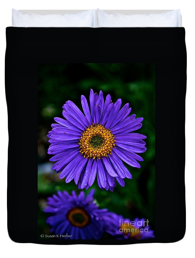Plant Duvet Cover featuring the photograph Aster Trio by Susan Herber