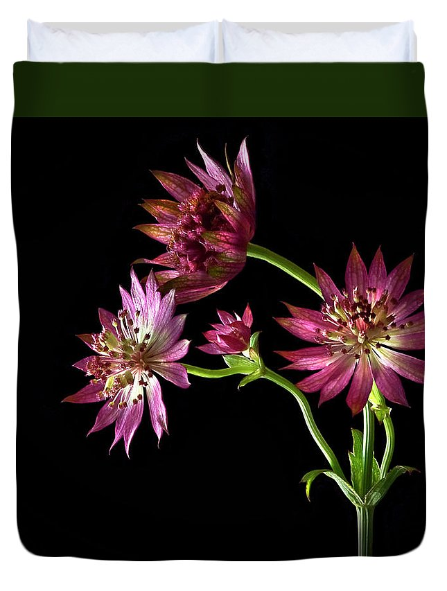 Flower Duvet Cover featuring the photograph Astrantia by Endre Balogh