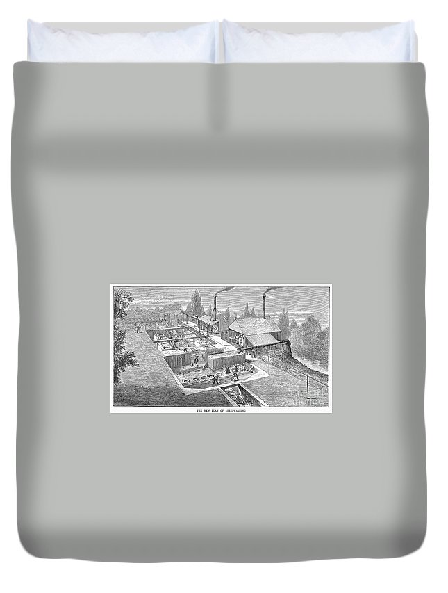 1872 Duvet Cover featuring the photograph Australia: Wool Industry by Granger