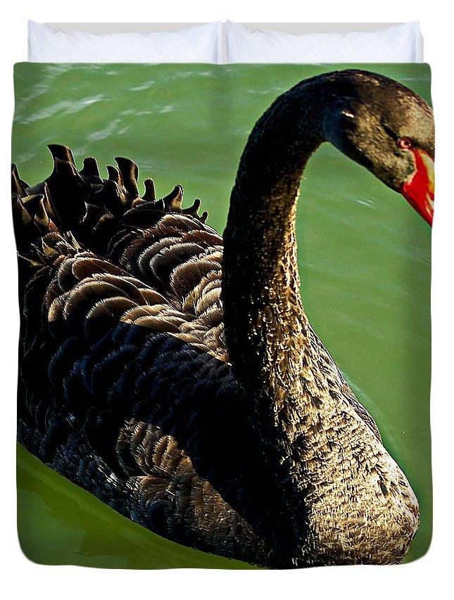 Blair Duvet Cover featuring the photograph Australian Black Swan by Blair Stuart