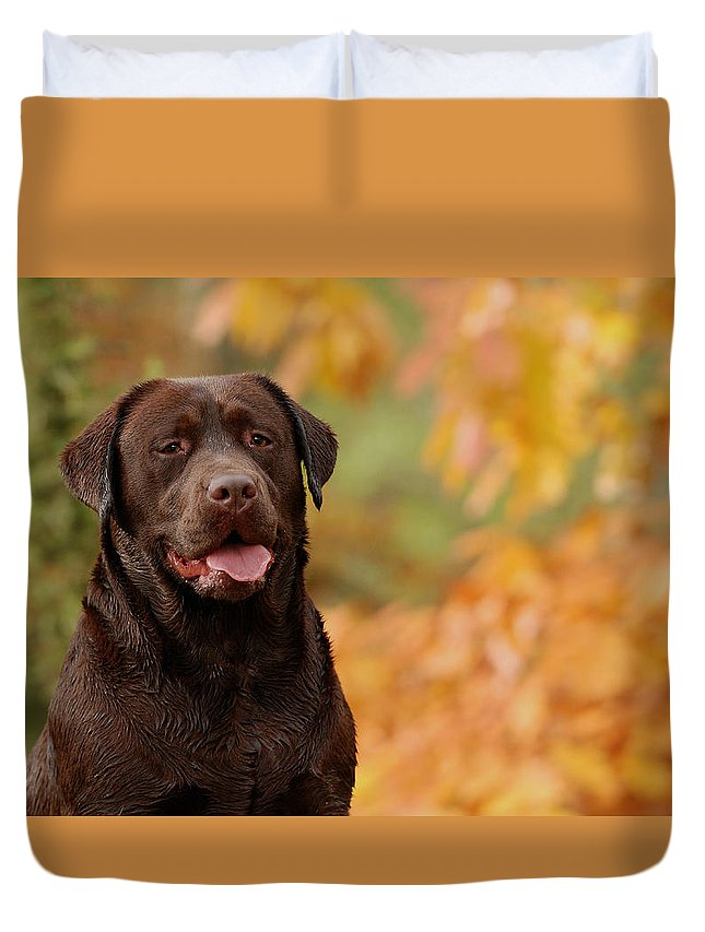 Animal Duvet Cover featuring the photograph Autumn Chocolate by Waldek Dabrowski