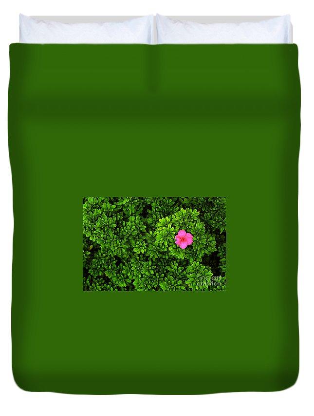 Azalea Duvet Cover featuring the photograph Azalea On Boxwoods by Mike Nellums