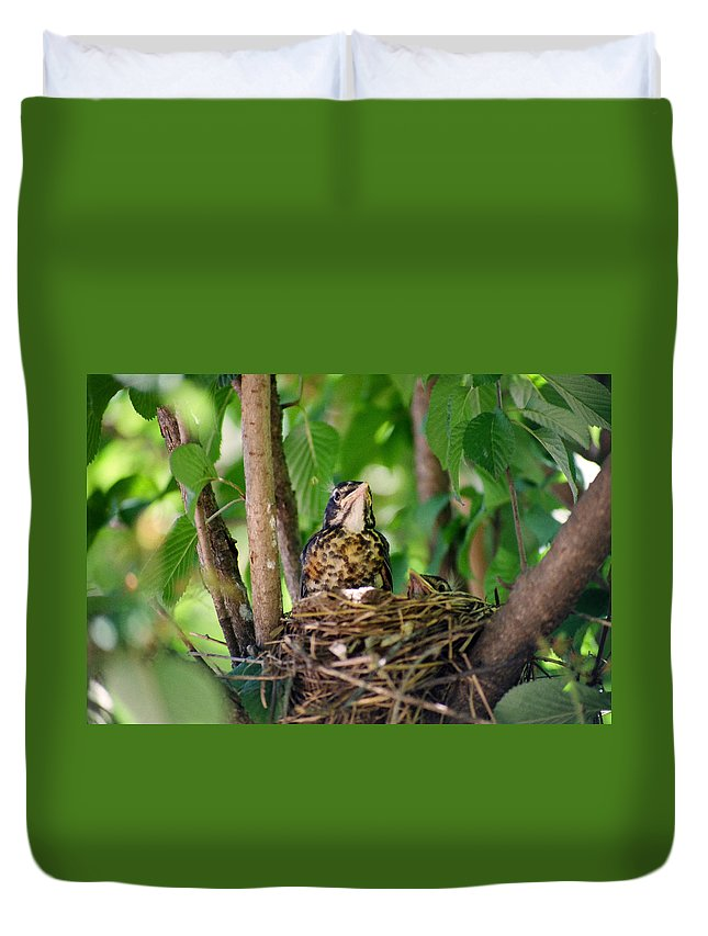 Birds Duvet Cover featuring the photograph Baby Birds by CJ Clark