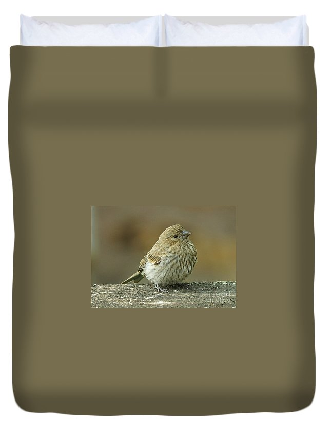 House Finch Duvet Cover featuring the photograph Baby House Finch by Lori Tordsen