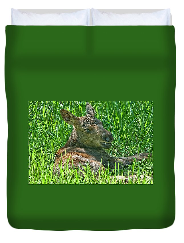 Moose Baby Duvet Cover featuring the photograph Baby Moose by Gary Beeler