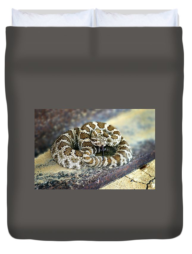 Rattle Snake Duvet Cover featuring the photograph Baby Rattle by Anthony Jones