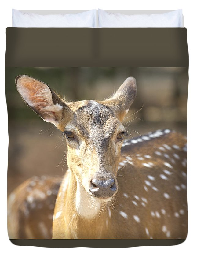 Deer Duvet Cover featuring the photograph Bad Haircut Day by Douglas Barnard