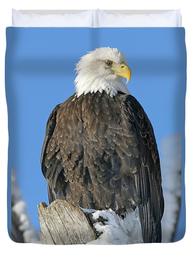 Light Duvet Cover featuring the photograph Bald Eagle Haliaeetus Leucocephalus by Robert Postma