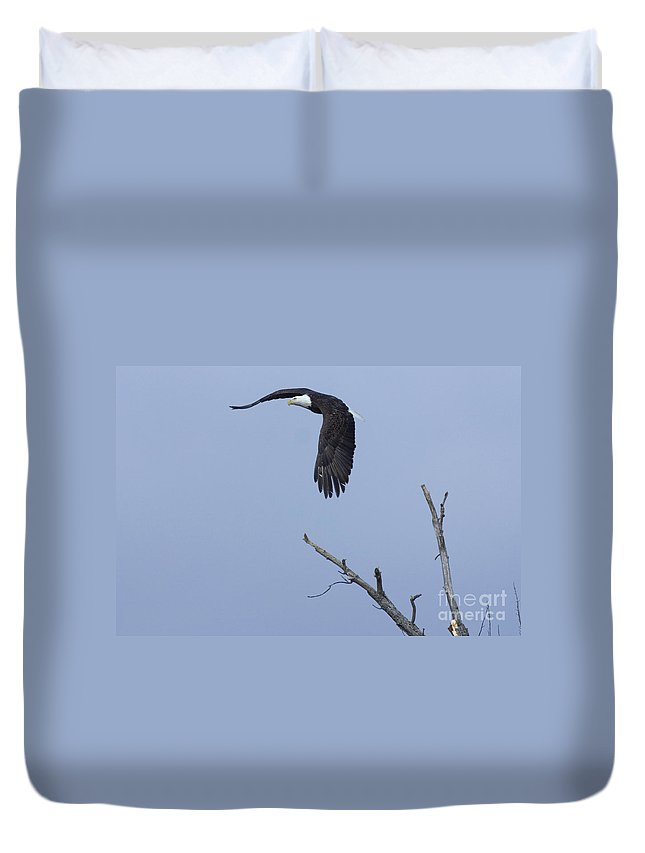 Animals Duvet Cover featuring the photograph Bald Eagle In Flight by Alan Look