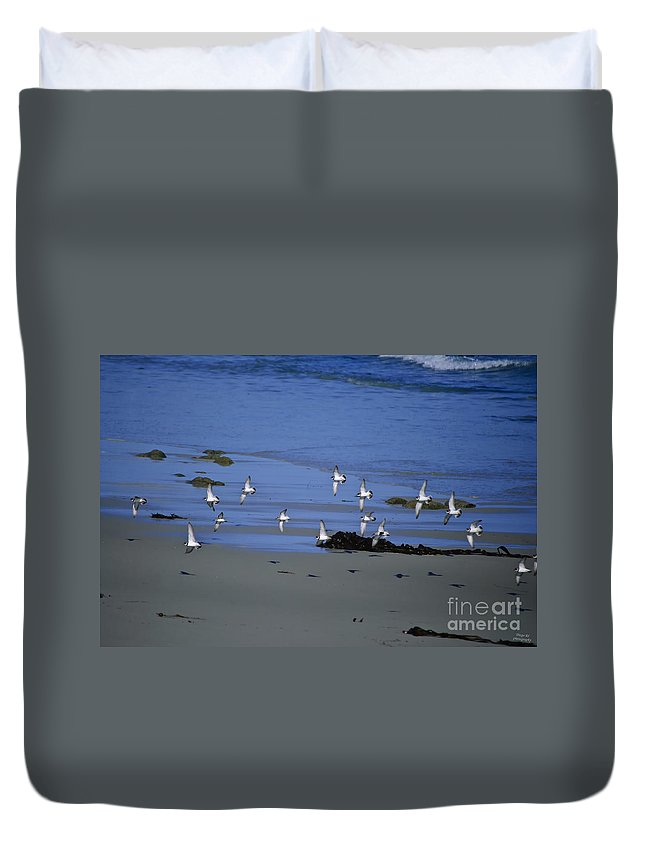Bird Duvet Cover featuring the photograph Band Of Seagulls by Diego Re