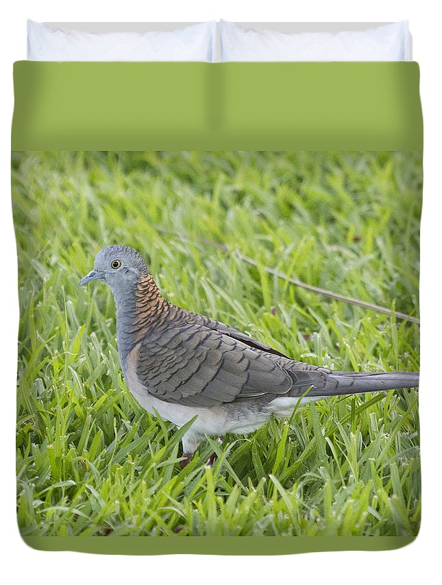 Bar-shouldered Dove Duvet Cover featuring the photograph Bar-shouldered Dove by Douglas Barnard