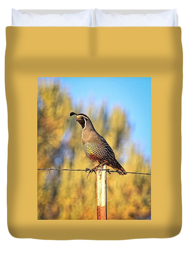 Quail Duvet Cover featuring the photograph Barbed Wire Quail by Steve McKinzie
