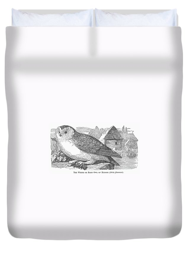 1877 Duvet Cover featuring the photograph Barn Owl, 1877 by Granger