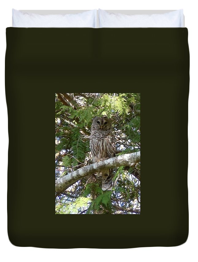 Birds Duvet Cover featuring the photograph Barred Owl by Francine Frank