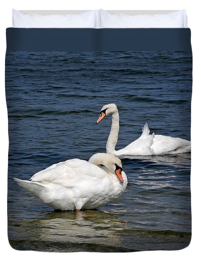 Swan Duvet Cover featuring the photograph Bathing Beauties by Lynda Lehmann