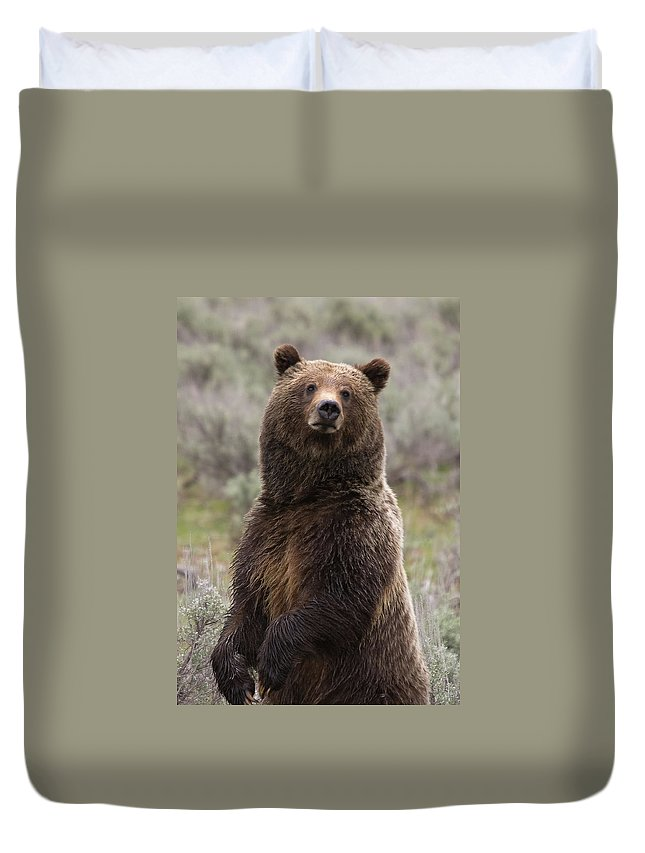 Grizzly Bear Duvet Cover featuring the photograph Bear 399 by Steve Stuller