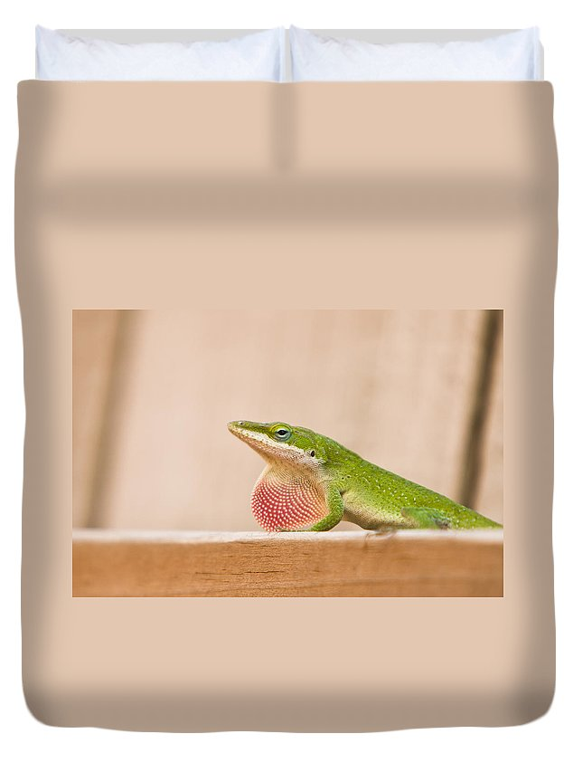 Animal Duvet Cover featuring the photograph Beautiful Carolina Anole by Ellie Teramoto
