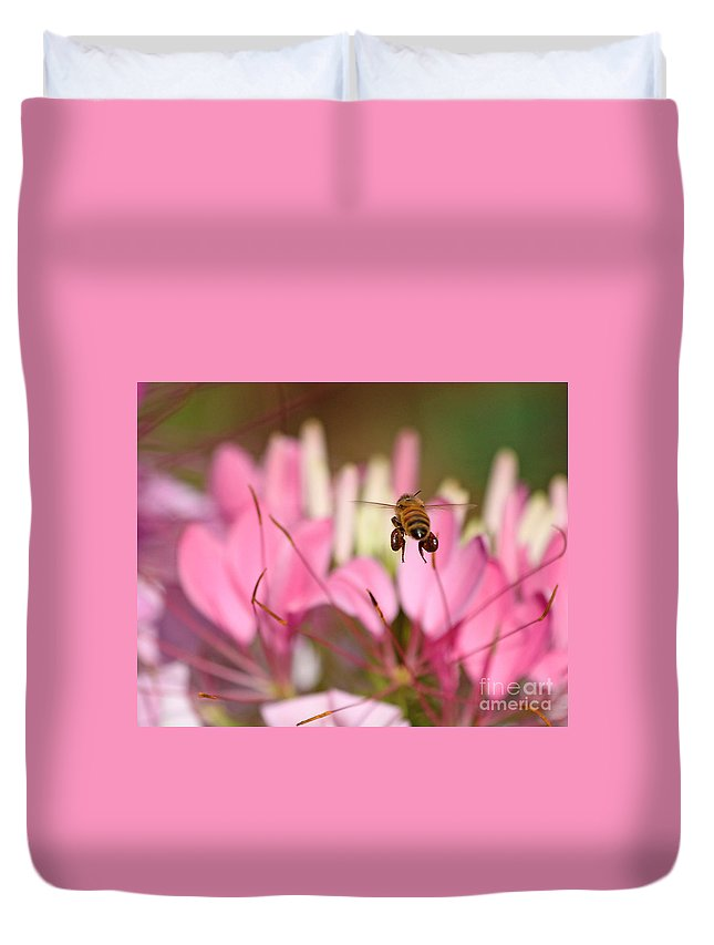 Bee Duvet Cover featuring the photograph Bee In Flight Over Cleome Flower by Jack Schultz