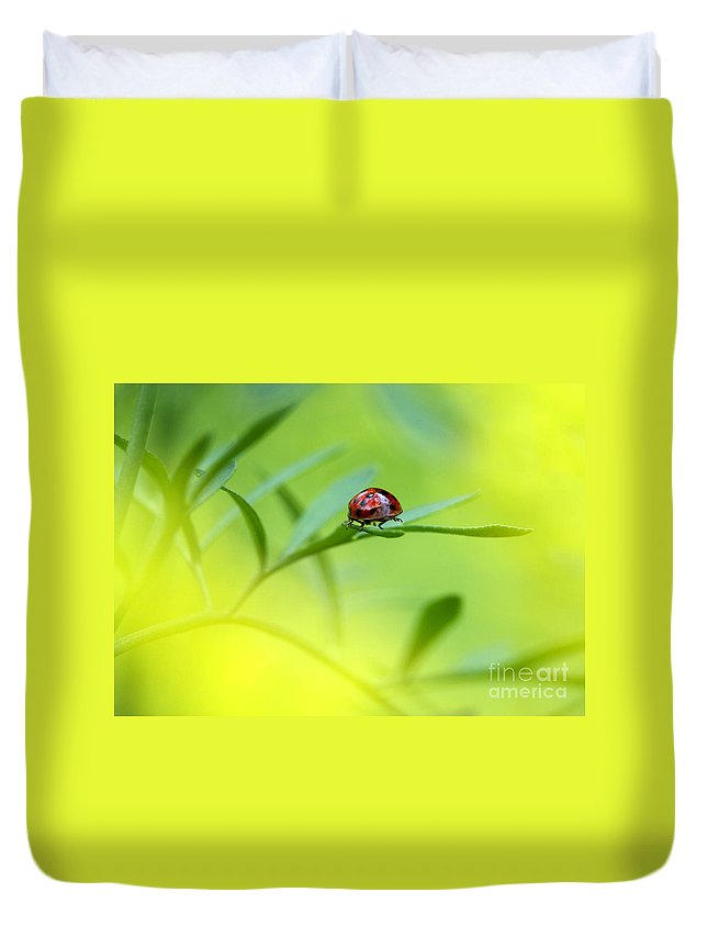 Ladybug Duvet Cover featuring the photograph Beetle Butt by Sharon Talson