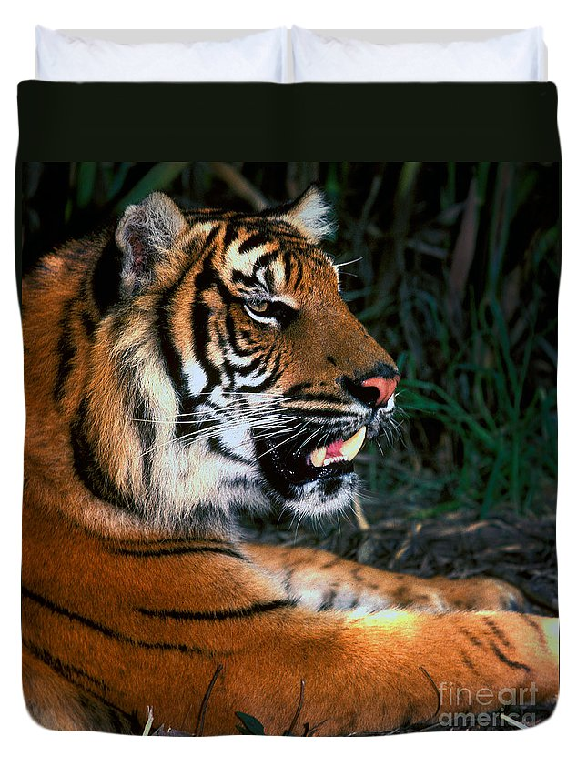 Tiger Duvet Cover featuring the photograph Bengal Tiger - Teeth by Paul W Faust - Impressions of Light