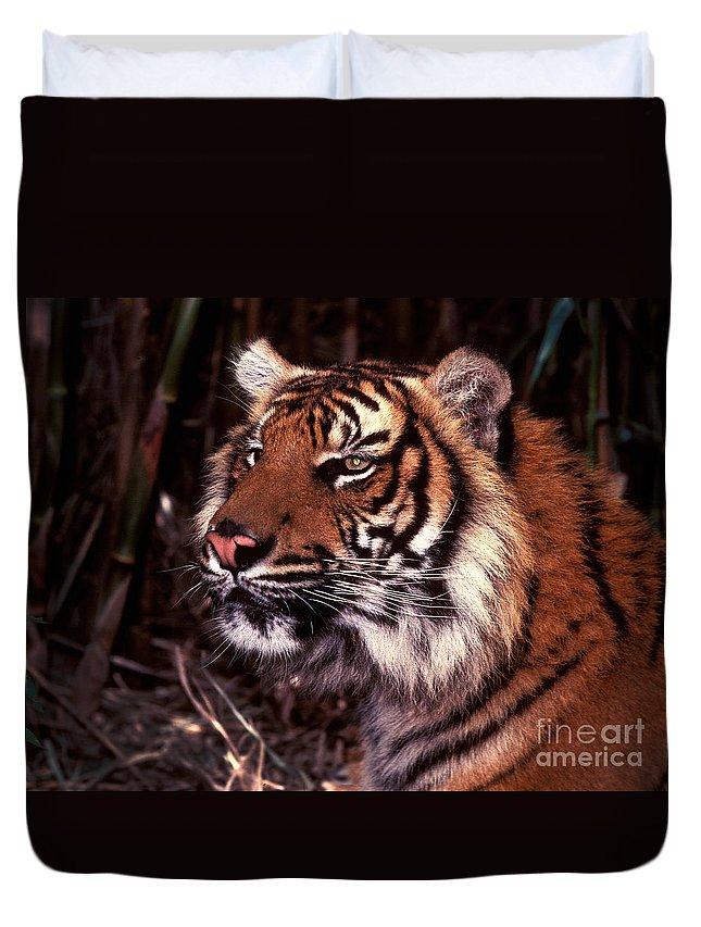 Tiger Duvet Cover featuring the photograph Bengal Tiger Watching Prey by Paul W Faust - Impressions of Light