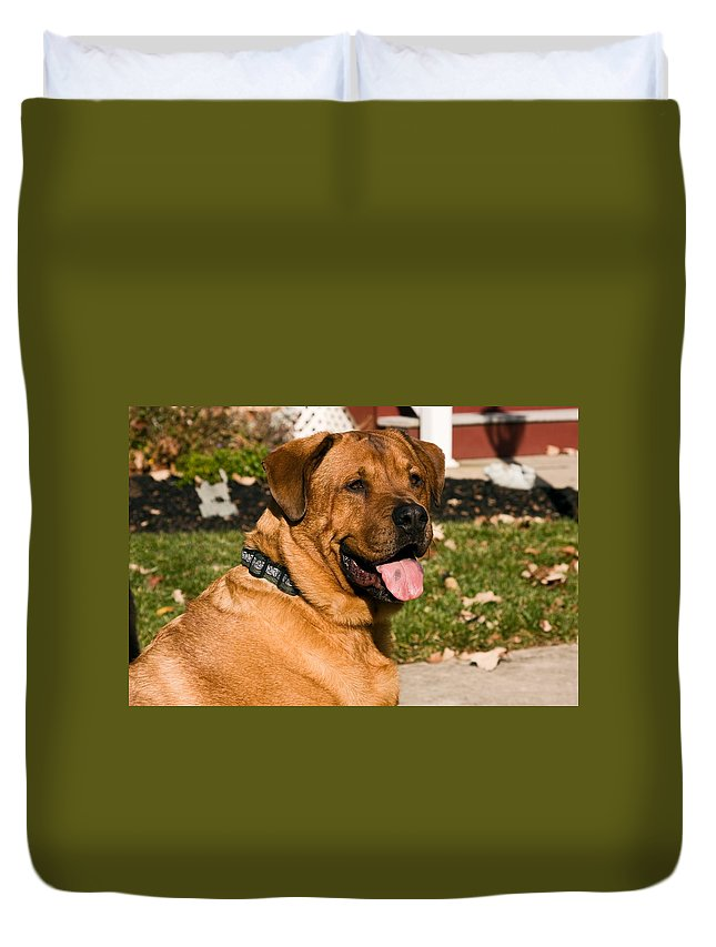 Large Dog Duvet Cover featuring the photograph Big Dog by Sally Weigand