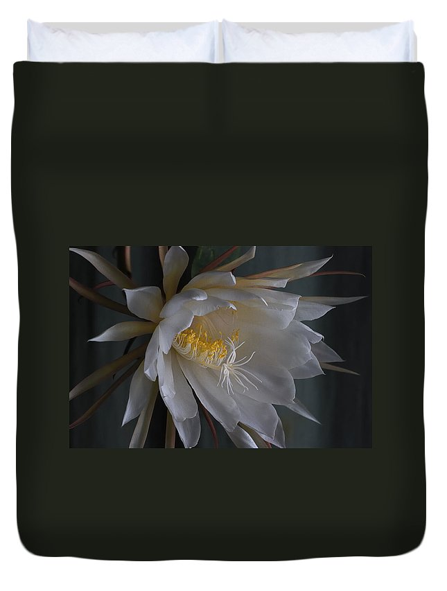 Nature Duvet Cover featuring the photograph Big Night Out by Susan Capuano