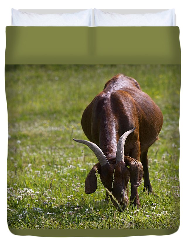 Capra Aegagrus Hircus Duvet Cover featuring the photograph Billy Goat Or Nanny Goat by Kathy Clark