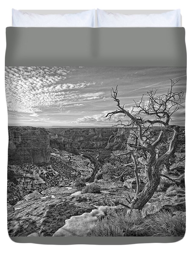 Light Duvet Cover featuring the photograph Black And White Image Of Tree by Robert Postma