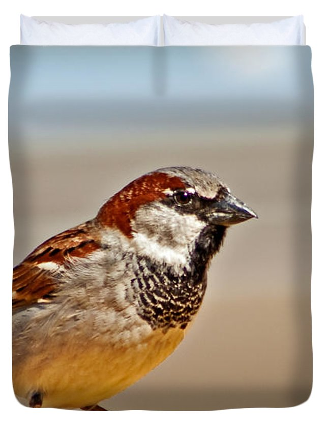 Bird Duvet Cover featuring the photograph Black-chinned Sparrow by Robert Bales
