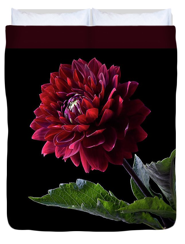 Flower Duvet Cover featuring the photograph Black Dahlia by Endre Balogh