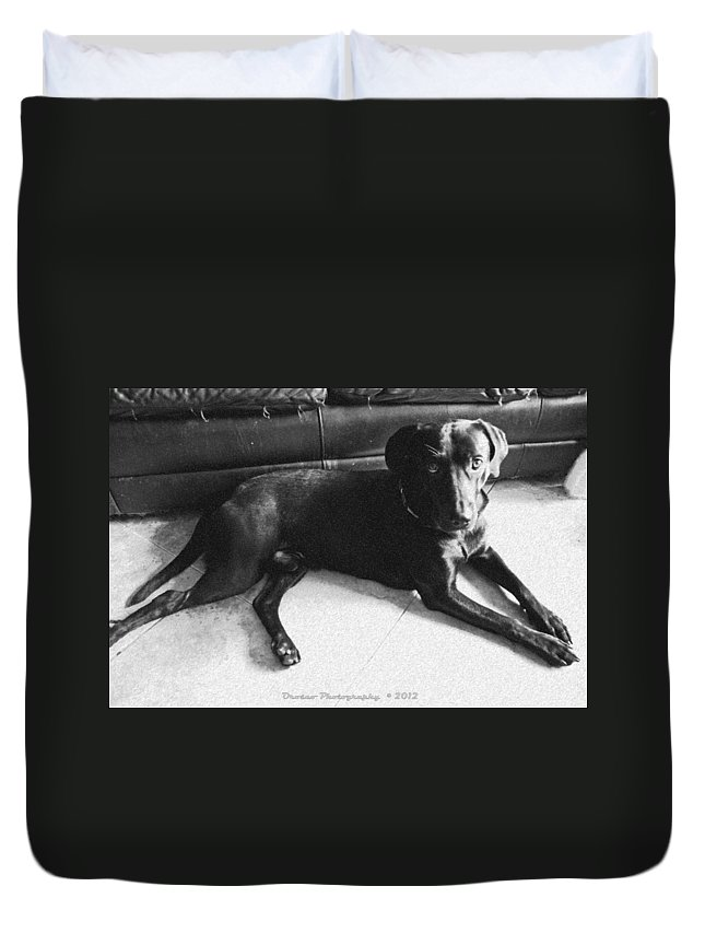 Dog Duvet Cover featuring the photograph Black Labrador Retriever by G Adam Orosco