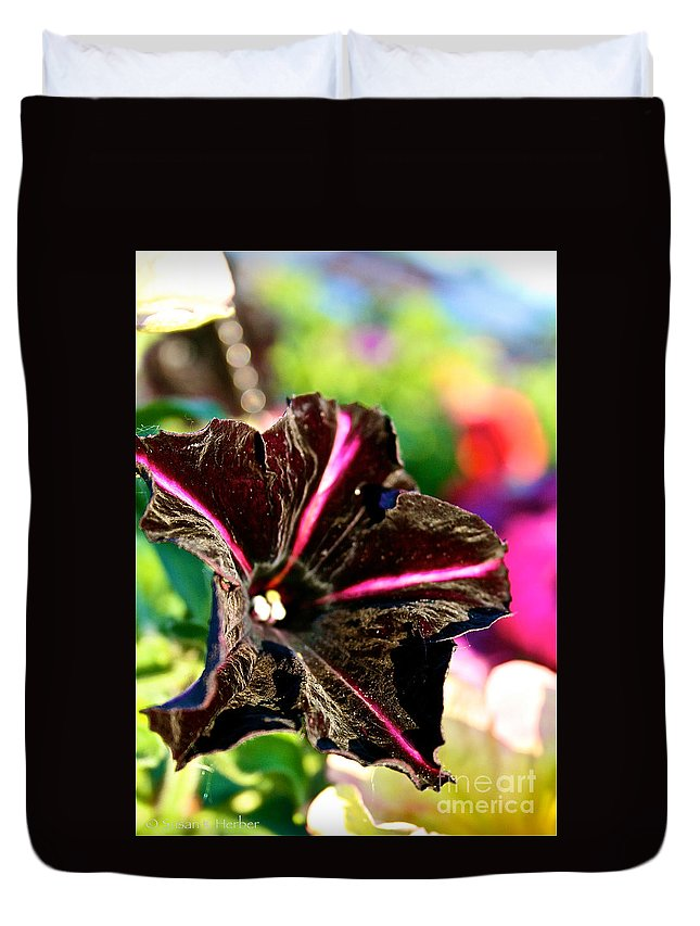 Outdoors Duvet Cover featuring the photograph Black Spider Petunia by Susan Herber