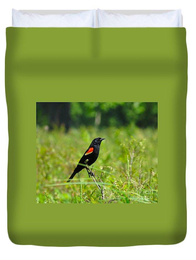 Black Duvet Cover featuring the photograph Blackbird by Art Dingo