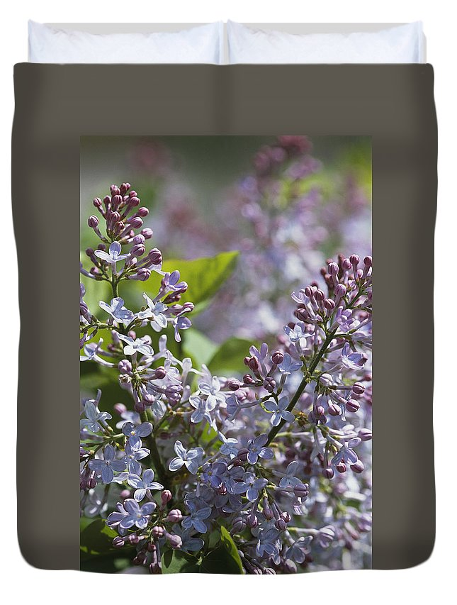 North America Duvet Cover featuring the photograph Blossoming Hyacinthiflora Lilacs by Darlyne A. Murawski