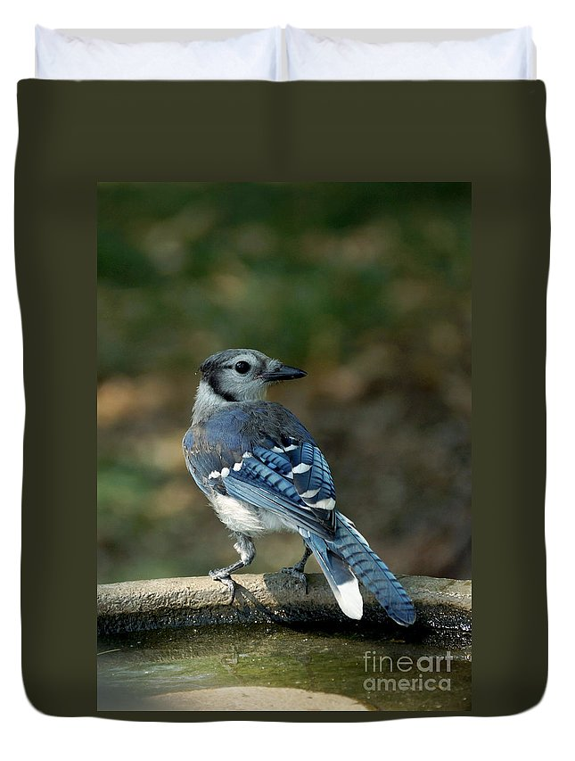 Blue-jay Duvet Cover featuring the photograph Blu-jay by Lori Tordsen