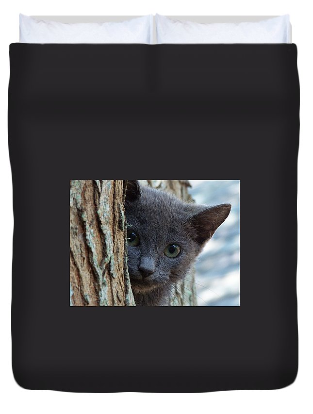 Cat Duvet Cover featuring the photograph Russian Blue,cat by Sandra Reeves
