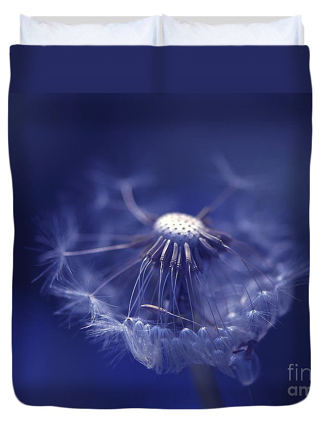 Dandelion Duvet Cover featuring the photograph Blue Dandy by Sharon Talson