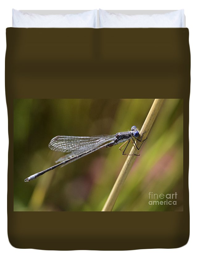 Blue Dasher Duvet Cover featuring the photograph Blue Dasher by Bob Christopher