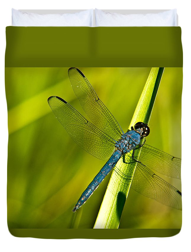 Blue Duvet Cover featuring the photograph Blue Dragonfly 10 by Douglas Barnett